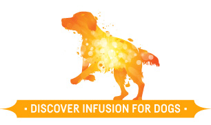 Infusion Dogs