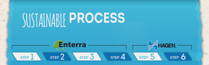 Sustainable Process - 6 steps