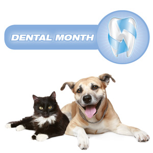 February is Dental Month