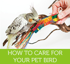 Tips and Advice for Bird Lovers