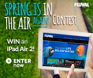 Enter to WIN an iPad Air 2!