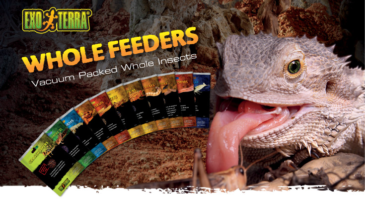Exo Terra Whole Feeders - Vacuum packed whole insects