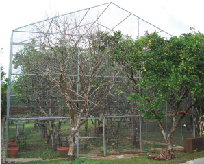Feeding stations in the pre-release flights are located very high so that birds learn to find food up high in the trees.
