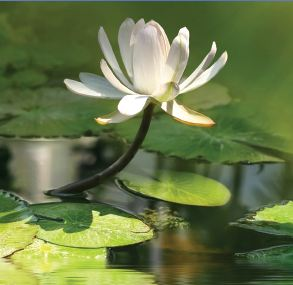 Openng your pond in 7 easy steps