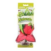 """Marina Naturals Red & Green Pickerel Silk Plant - Medium - 9 - 10"""" (23 - 25.5 cm)"""
