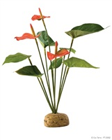 Exo Terra Rainforest Plant - Anthurium Bush