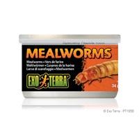 Exo Terra Mealworms - 34 g (1.2 oz)