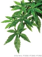 Exo Terra Silk Plant - Abutilon - Small