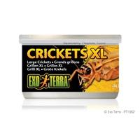 Exo Terra Crickets - XL - 34 g (1.2 oz)