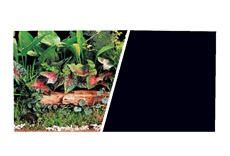 "Marina Double Sided Aquarium Background - Plant Scene/Solid Black - 45.7 cm x 7.6 m (18"" x 25 ft)"