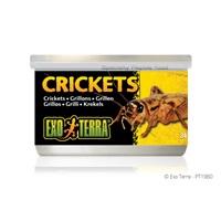 Exo Terra Crickets - 34 g (1.2 oz)