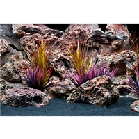 "Marina Double Sided Aquarium Background - Jungle Flora/Red Lace - 30 x 60 cm (12"" x 24"")"