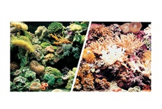"Marina Double Sided Aquarium Background - Marine Reef/Coral Scenes - 45.7 cm x 7.6 m (18"" x 25 ft)"