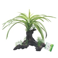 "Fluval Fountain Plant - 25 cm (10"") on root"