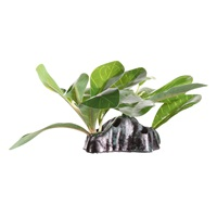 "Fluval Decorative Plant - Dwarfed Anubias - Small - 15 cm (6"") with base"