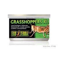 Exo Terra Canned Grasshoppers - XL - 34 g (1.2 oz)
