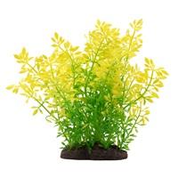 Fluval Aqualife Plant Scapes Sunrise Water Violet Plant - 20 cm (8 in)