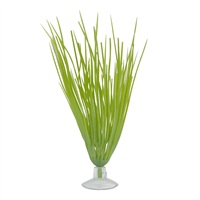 "Marina Betta Kit Hairgrass Plant With Suction Cup - 12.7 cm (5"")"