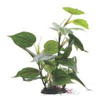 "Fluval Decorative Plants - Anubias - 30 cm (12"") with base"