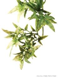 Exo Terra Jungle Plant - Croton