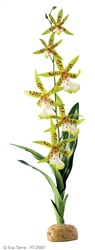 Exo Terra Rainforest Plant - Spider Orchid
