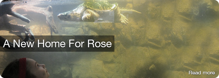 A New Home for Rose