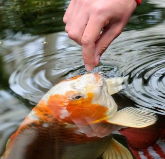 Opening Your Pond: 7 Easy Steps