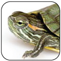 2014 Reptile Features