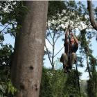 Marc-André Villeneuve climbing a quamwood tree.