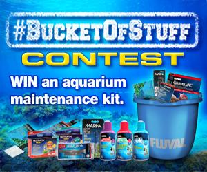 Bucket of Stuff contest